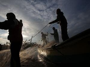 Palestinian fishermen collect fish from their nets in Gaza City. (AFP/Mohammed Abed)