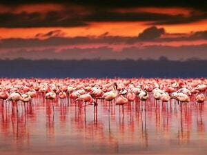 Flamingos becoming a rare sight as Turkey's Lake Tuz (Twitter)