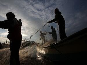 Palestinian fishermen collect fish from their nets in Gaza City. (AFP/File)