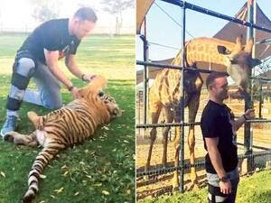 Wayne Rooney played with a tiger and fed a giraffe at a friend's farm in Al Khawaneej during a short trip to Dubai last week (source: Animal Farm)