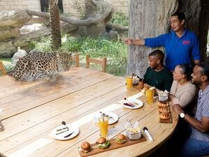 Guests will be in for a treat as the Amur Leopard will be joining them on the same table for lunch.