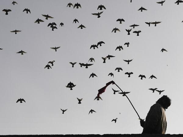 In this photograph taken on February 3, 2019, a keeper tends his pigeons on the roof of his house in the old quarters of New Delhi. Pigeon flying, locally known as Kabootar Bazi, is a popular hobby among people living in the old quarters of the capital city. Sajjad HUSSAIN / AFP