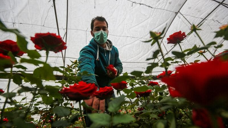COVID-19 Tightens the Rope Around Gaza Flower Farmers' Necks