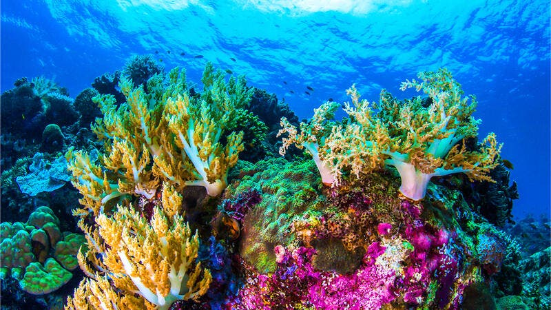 Great Barrier Reef found new coral larger than skyscrapers environmental news