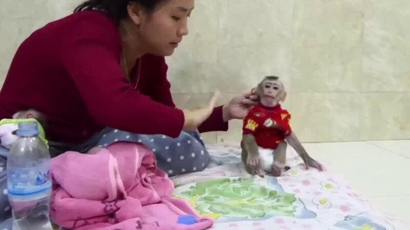 One showed a man boasting how he made a baby monkey 'super loud cry' while he choked her and another showed a monkey being held upside down and slapped. (YouTube)