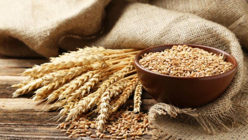 Egypt also decided to scrap the process of sending a team of six government officials to the port where the wheat was being shipped from. (Shutterstock)