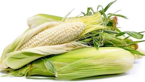 فوائد الذرة البيضاء البوابة