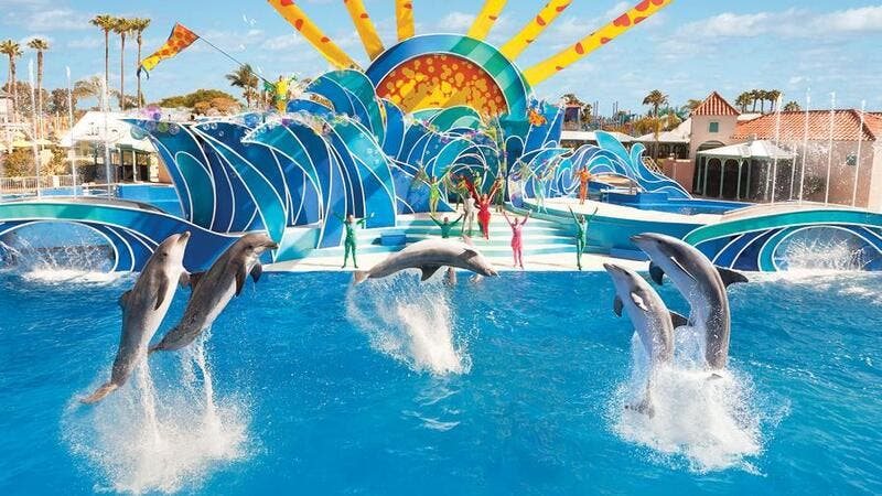 Nearly 100,000 animal rights campaigners signed a petition to protest the opening of a Sea World park in Dubai last year. (Sea World San Diego)
