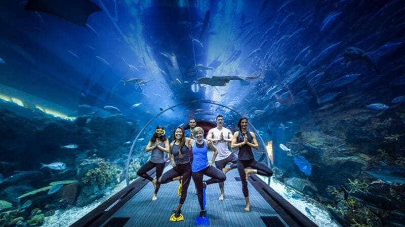The sessions are designed to reconnect you with your senses, set in the tranquility of the underwater tunnel of the world's largest suspended aquarium.