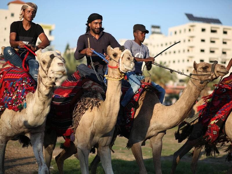 Bedouin youths ride their camels during a race in Gaza (Twitter)