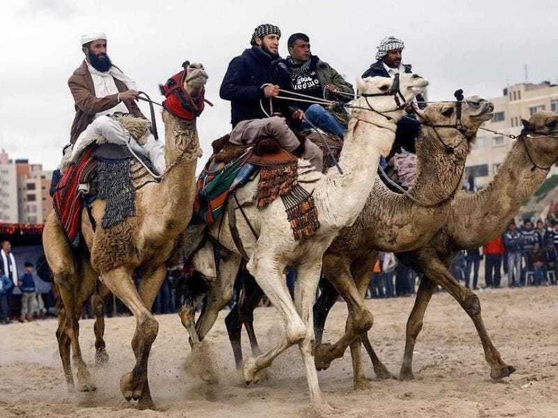 Palestinian jockeys compete during a local camel race held at the destroyed Gaza airport (Twitter)