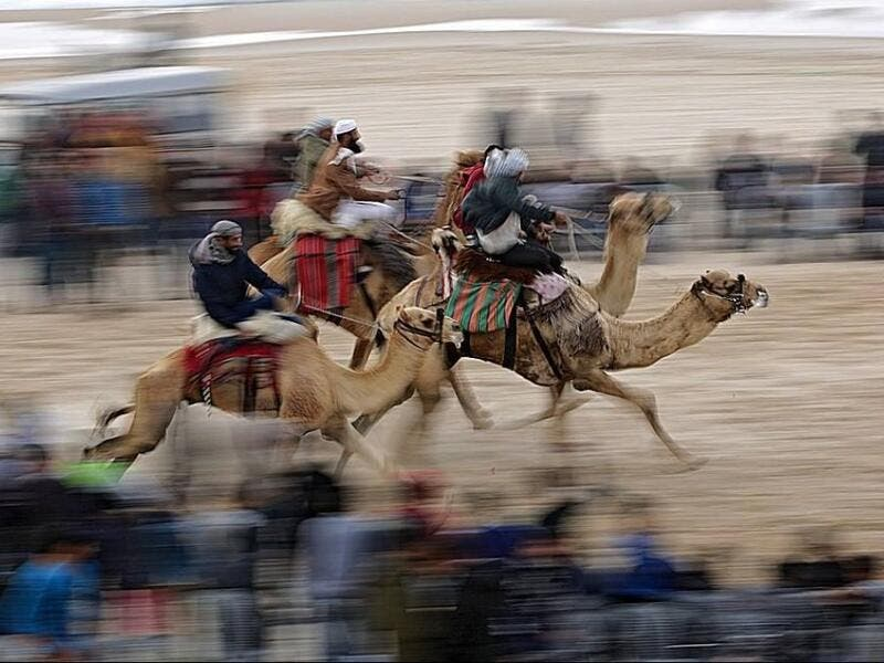 Camel race in Gaza  (Twitter)