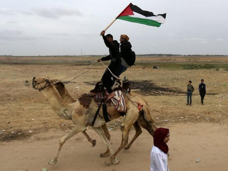 Camel near Palestinian bystanders during a local camel race held at the destroyed Gaza airport in Rafah in the southern Gaza Strip (Twitter)