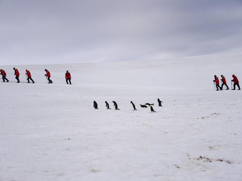 Tourists and Barbijo penguins (Pygoscelis antarcticus) are seen on Half Moon island, Antarctica on November 09, 2019. Johan ORDONEZ / AFP