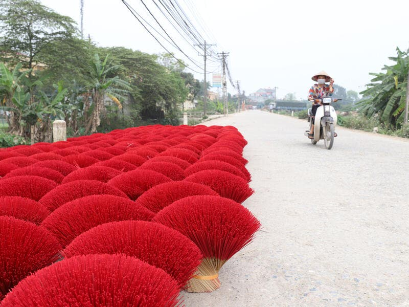 Vietnamese workers collect dried incense sticks in Quang Phu Cau village on the outskirts of Hanoi on January 9, 2020 ahead of the upcoming Lunar New Year celebrations, referred to in Vietnam as Tet (Shutterstock)