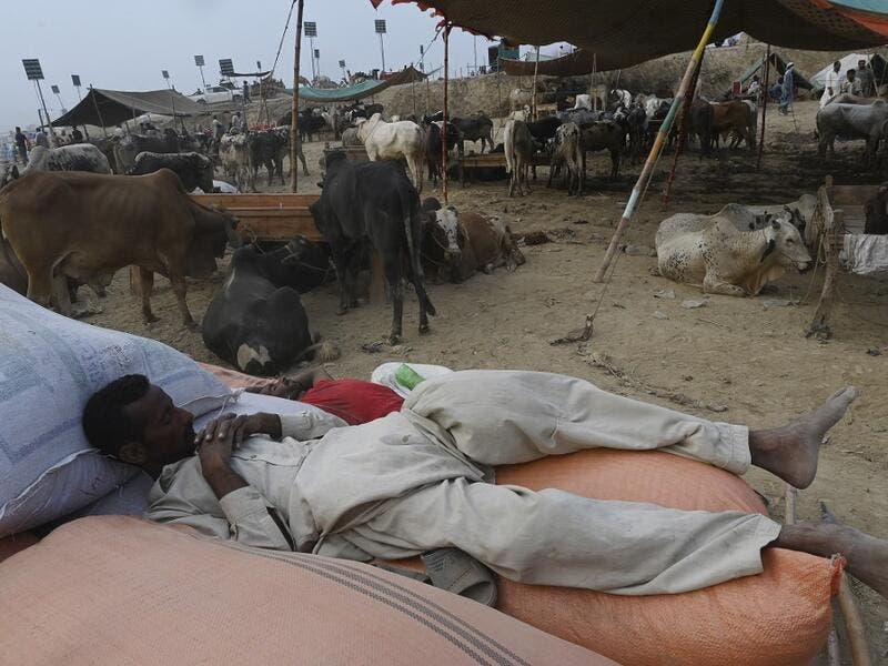 "Traders rest at a cattle market set up for the upcoming Muslim festival Eid al-Adha also called ""Festival of the Sacrifice"", in Rawalpindi on July 20, 2020. Aamir QURESHI / AFP"