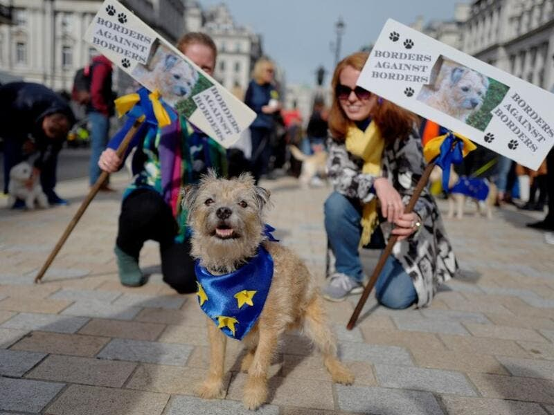 "Dog owners and their pets gather before participating in a pro-EU, anti-Brexit march, calling for a ""People's Vote on Brexit"", in central London on October 7, 2018. (Tolga AKMEN / AFP)"