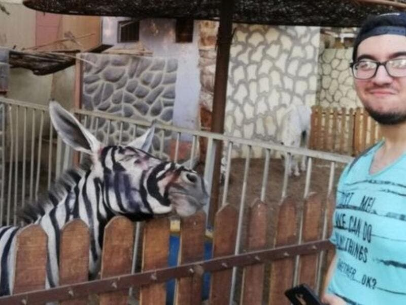 Donkey was painted to look like a Zebra (Twitter)
