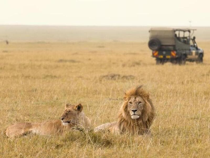 Safari tour through Africa:  The best Safari tour would be in Africa because you will have the opportunity to see wild life. (AFP/ File Photo)