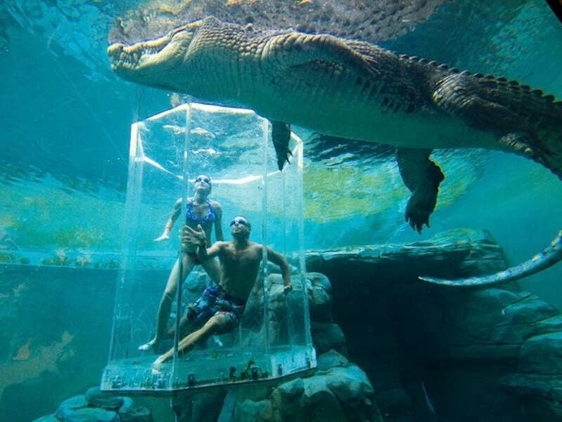 Dive With A 5+ Metre Crocodile Inside A Plastic Cage: there are some individuals who just love to get close to things that are dangerous to them. It doesn't get much more dangerous than the Saltwater Crocodile. (overseasattractions.com)