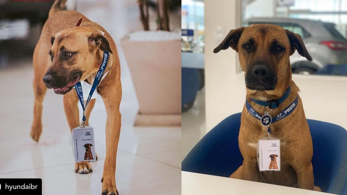 Hyundai dealership in Brazil has adopted and given a stray dog a new job title. (Instagram)