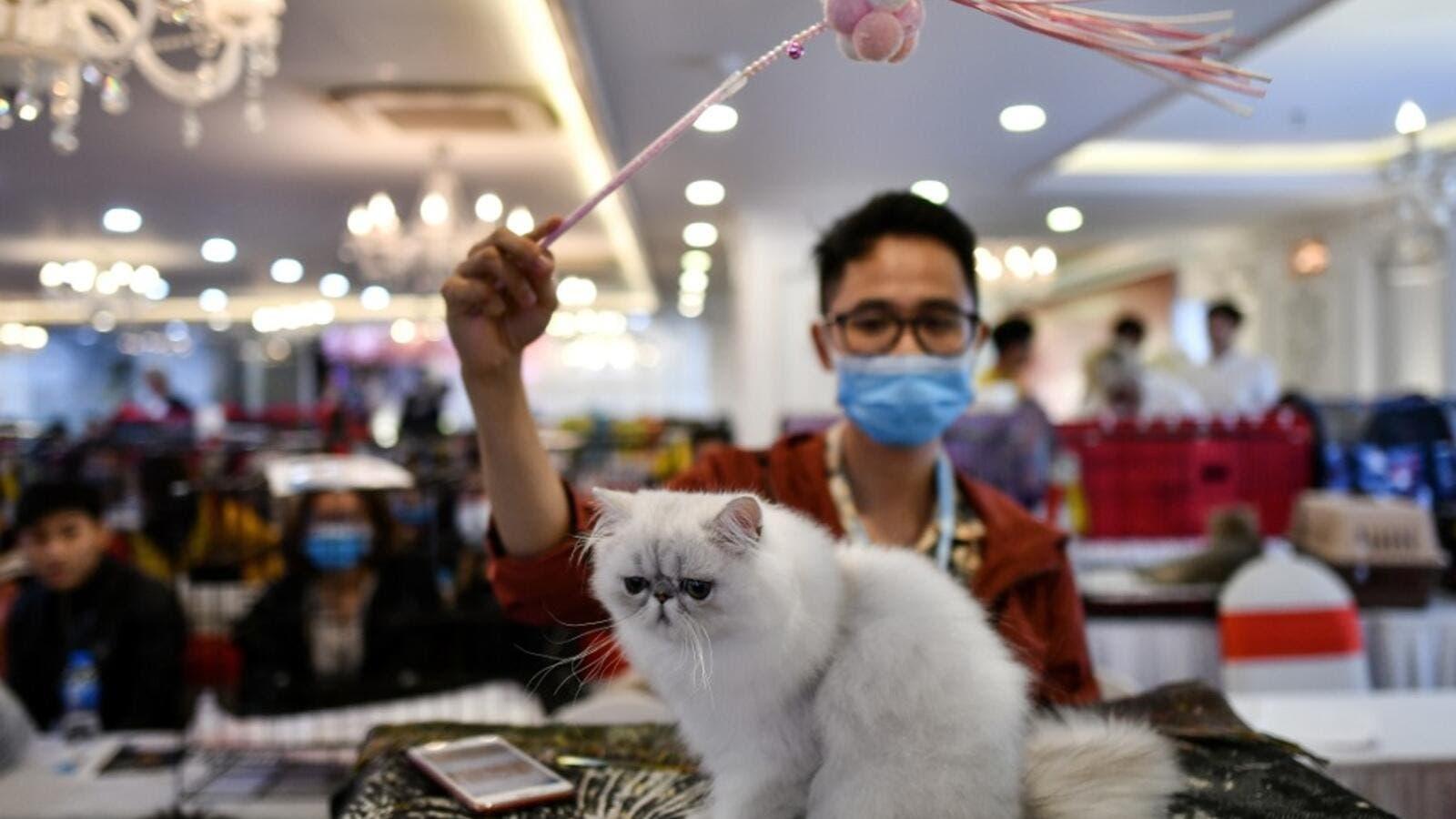 China may postpone annual congress because of coronavirus
