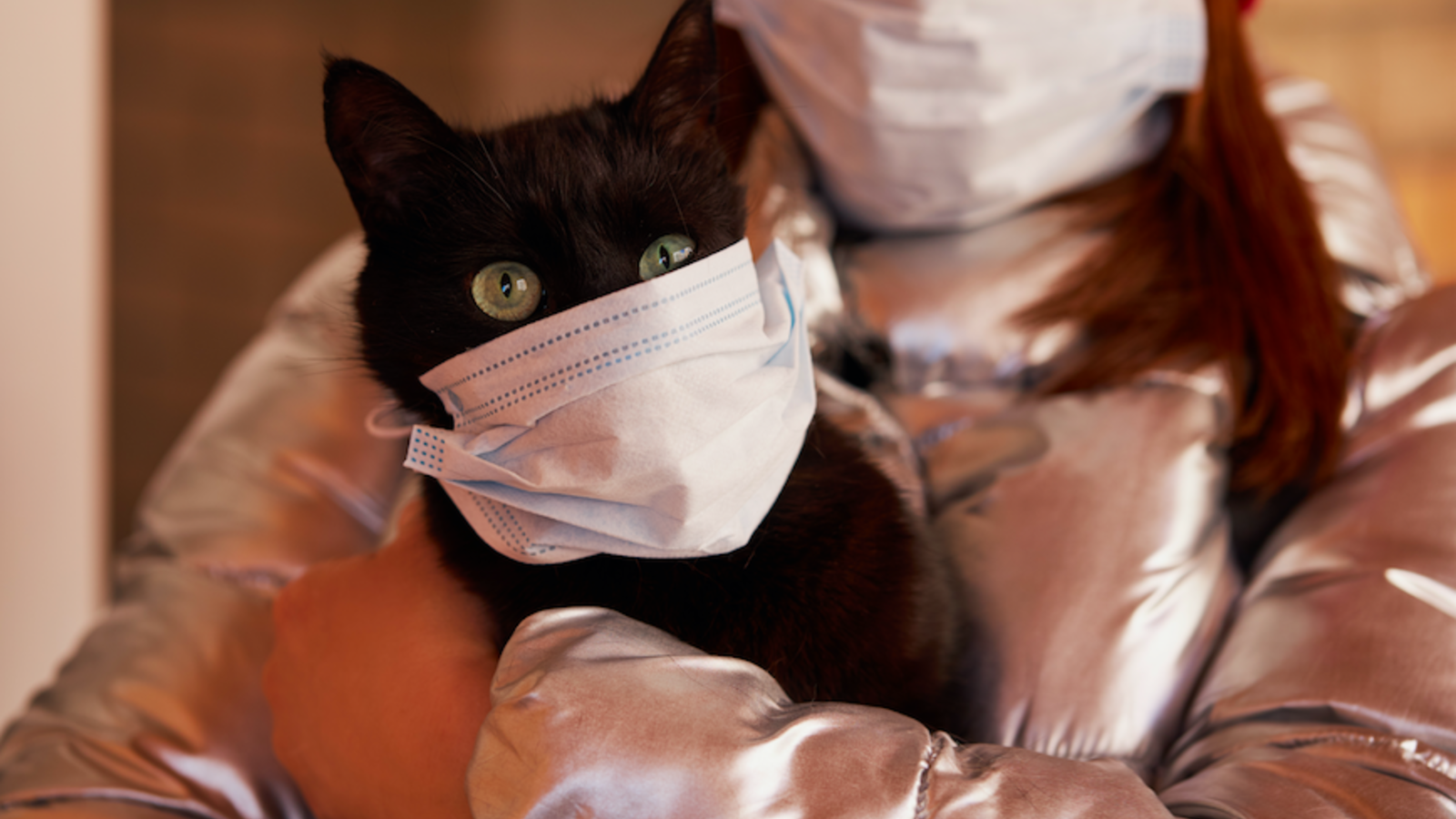 A Cat Tests Positive for Coronavirus
