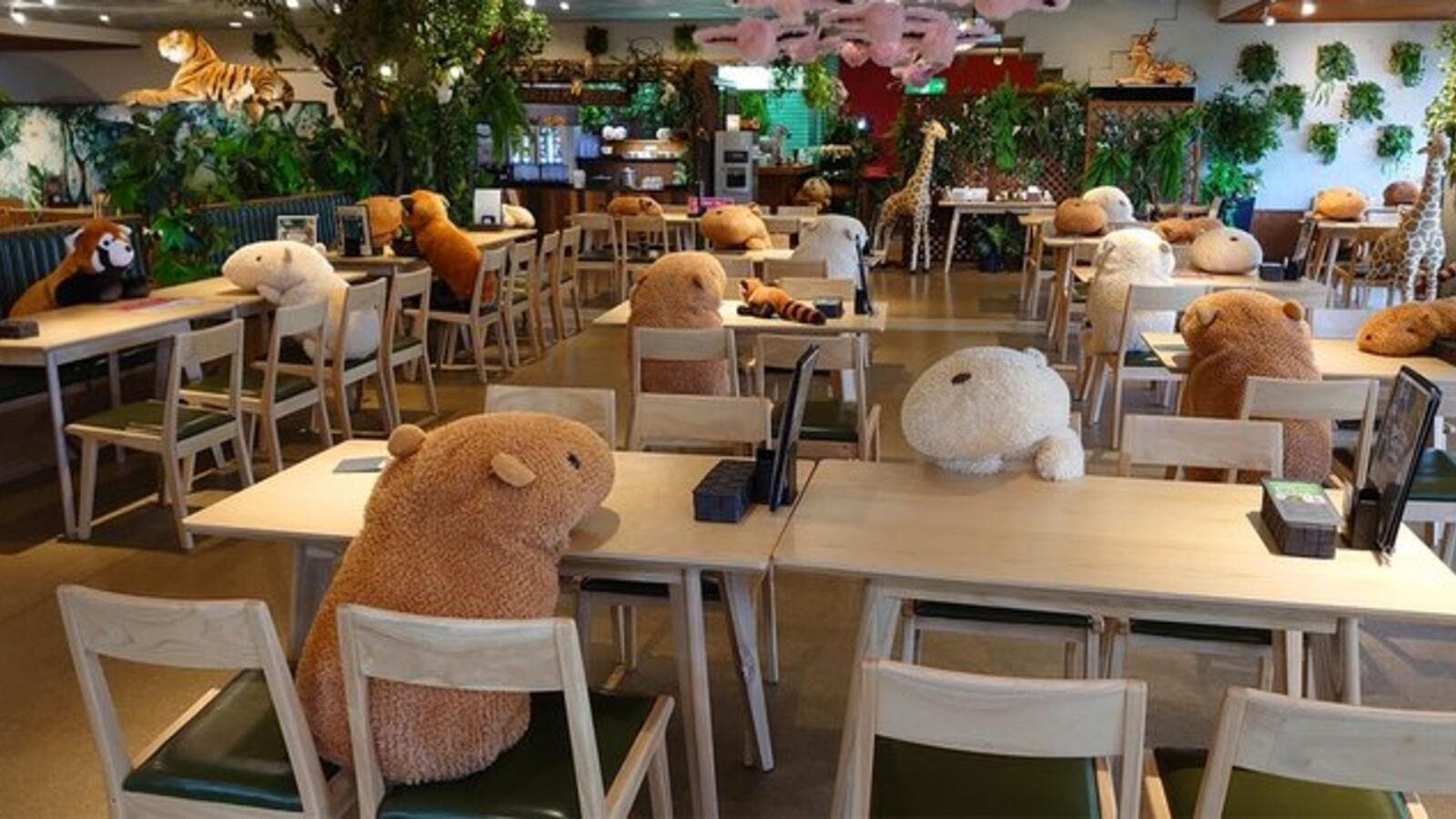 Japanese Cafe Uses Plush Capybaras to Enforce Social Distancing ...