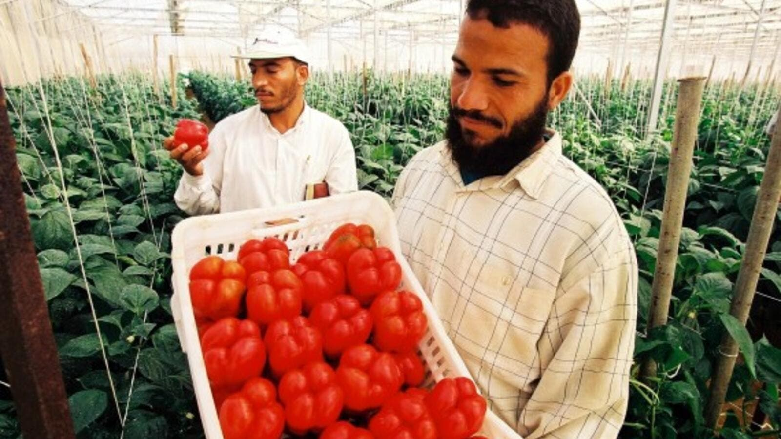 Egyptian agricultural products exported to Russia are estimated at $350 million annually. (USAID)