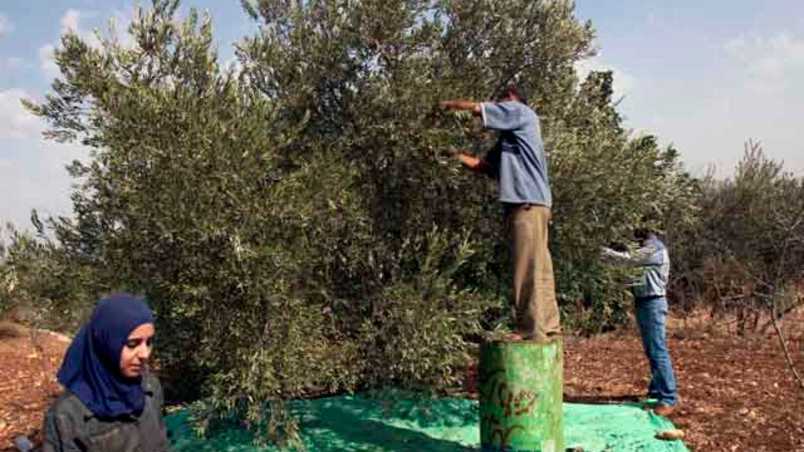Jordan's olive producers call for ban on exports and imports