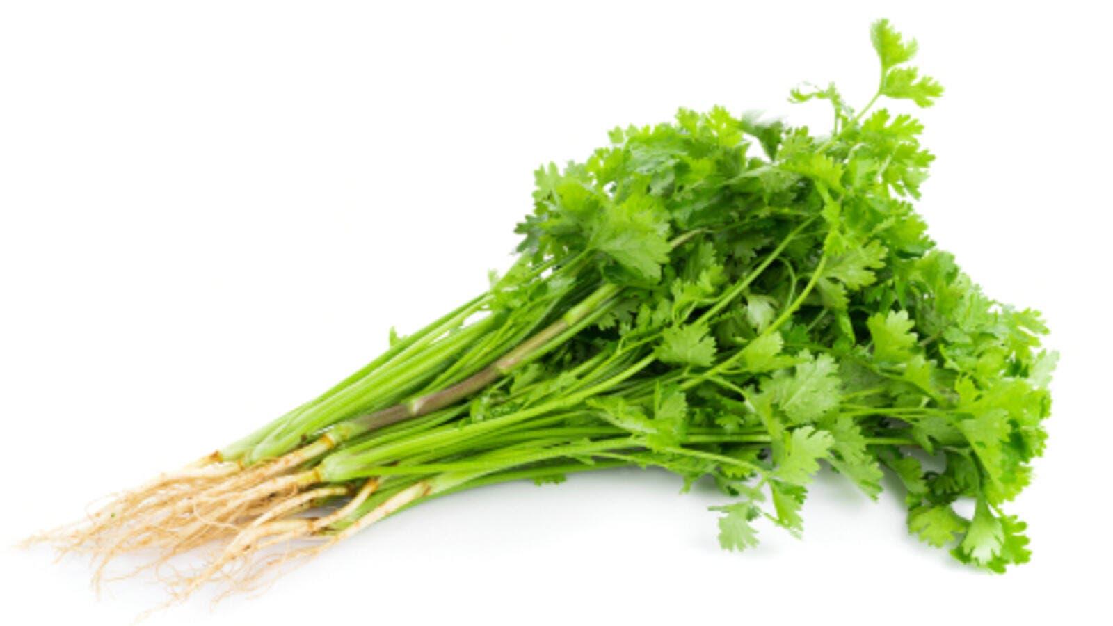 فوائد استعمالات عشبة الرشاد نبتة sativum-HEALTH2018.j