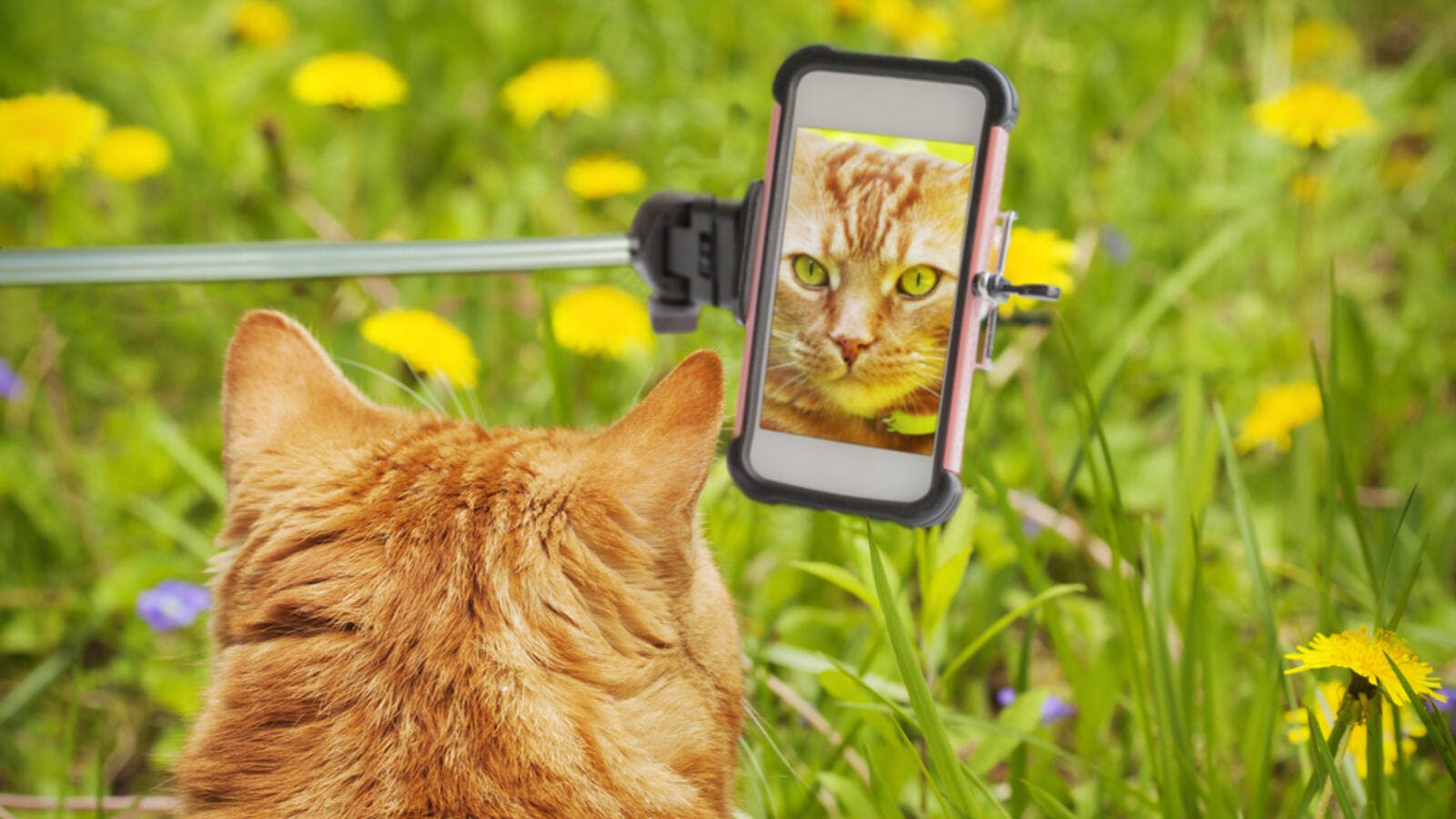 Selfies with cats, dogs, wolves, Snapchat filters, photography in general, and Pokemon cards, are all among things banned by Saudi religious figures. (Shutterstock)