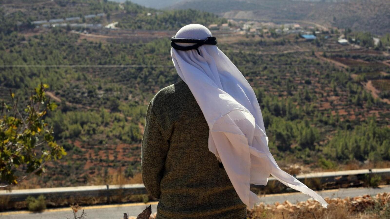 A Palestinian farmer watches over his olive trees, flanked by Israeli settlements in the occupied West Bank on October  28, 2014. (AFP/Abbas Momani)