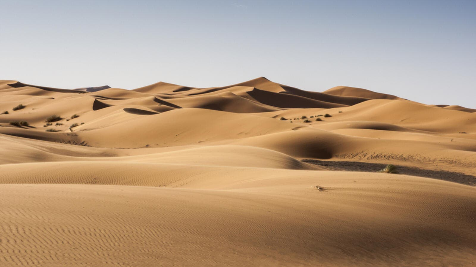 Tourist Found Dead in UAE Desert