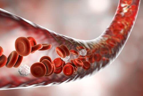كريات الدم البيضاء الأسباب الأعراض العلاج الأمراض التي تسببها البوابة