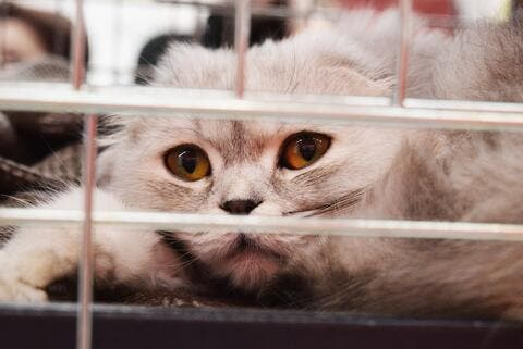 Caged Animals Die in Pet Markets After Pakistan Went Into Lockdown