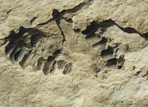 Archaeologists Uncover Earliest Human Footprints Ever Found in the Arabian Peninsula