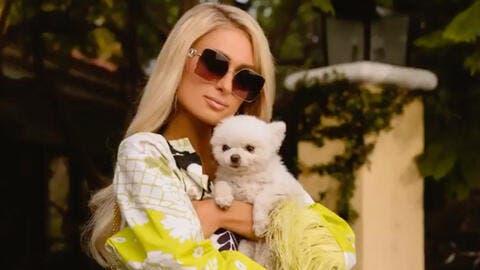 Paris Hilton Changes Longtime Goals of Being a Billionaire to Wanting Babies