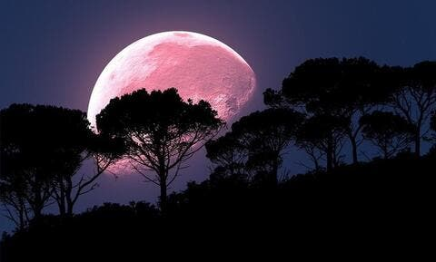 Look Up! Its a 'Pink Supermoon' Blasting in The Skies!