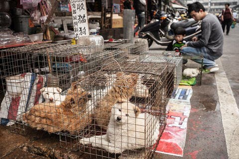 Rescuers Save 50 Caged Dogs From Meat Farm in South Korea