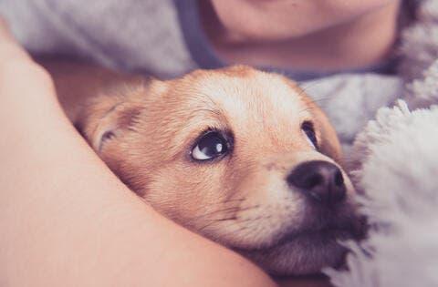 Beirut Blast Survivor Dog Gives Birth to Puppies Inside Acid Container