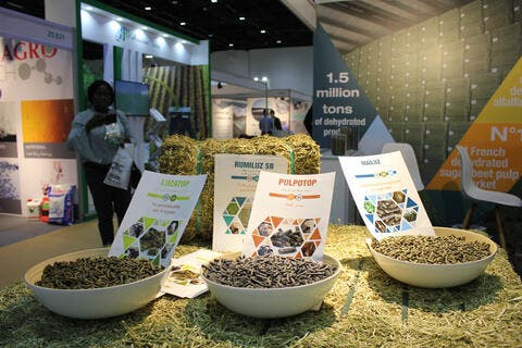 Food Security in the Arab World: Achievements, Challenges and Fears