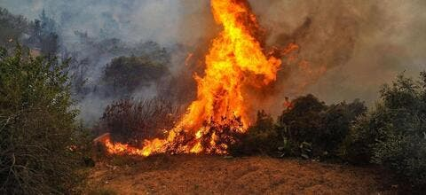 One Killed in Turkey's Massive Forest Fire