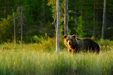 Colorado: Bear Climbs Into a Home, Leaves After Feasting on Cat Food