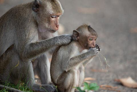 China Reports First Human Death From Monkey B Virus
