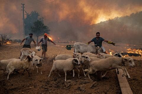 Turkey Successfully Controls 167 Wildfires