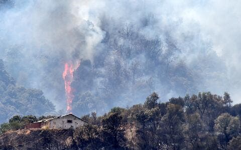 Forests Turn to Ash as Wildfires Continue Globally