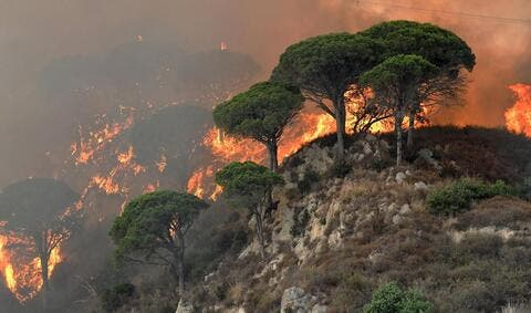 The World is Aflame With Massive Forest Fires - NASA
