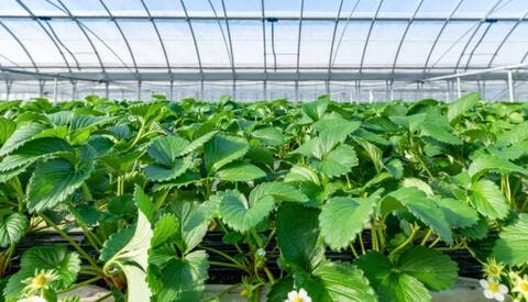 Why Doesn't Smart Agriculture Expand in Jordan?