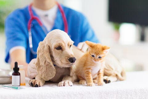 Startup of the Week: Vetwork - Redefining MENA's Animal Care Industry